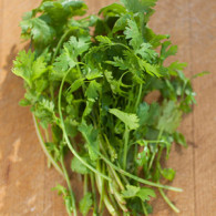 Bunch of Cilantro on a cutting board