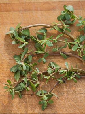 a few sprigs of purslane on a cutting board