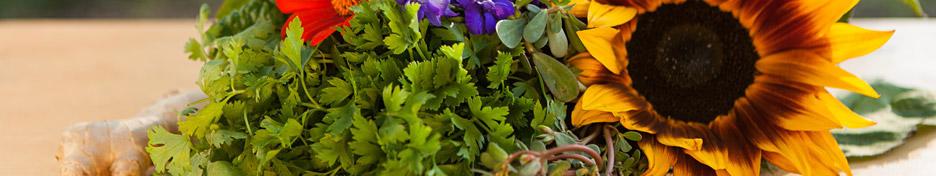 herbs-header