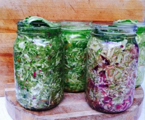 Sauerkraut Blog